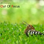 IDEAS&Creative Photography (Creative Out Of Focus)