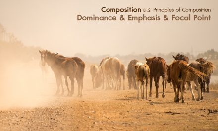 Composition ep.2.4 Principles of Composition (Dominance & Emphasis & Focal Point)