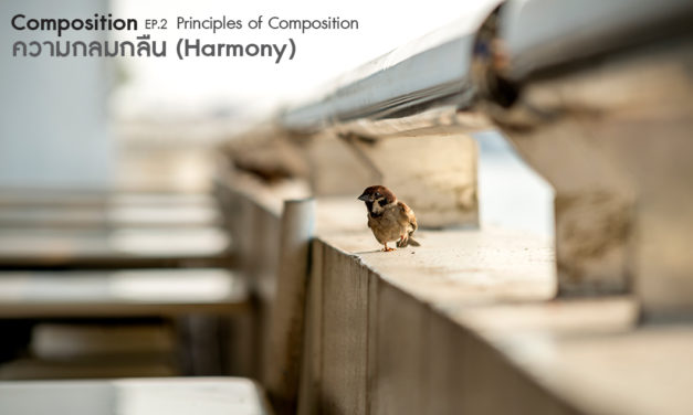 Composition ep.2.5 Principles of Composition (ความกลมกลืน-Harmony)