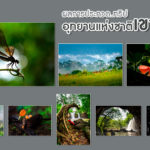 Khao Yai National Park Photo Contest