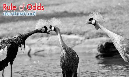Rule of Odds ปริศนาตัวเลขจำนวนคี่
