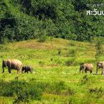 ตะลุย…ดินแดนซาฟารี สะวันน่าเมืองไทย Part II