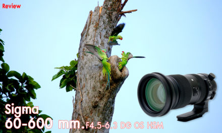 Review Sigma 60-600 mm. F4.5-6.3 DG OS HSM