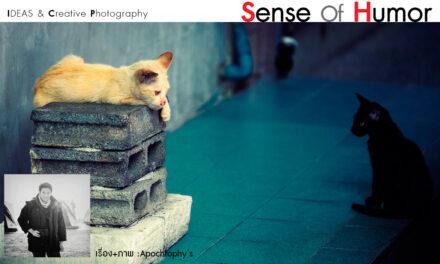 IDEAS&Creative Photography_Sense of Humor