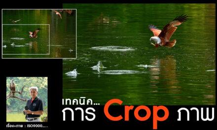เทคนิคการ Crop ภาพ