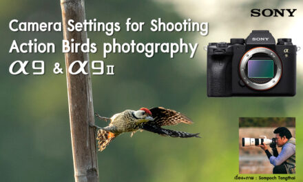 Camera Settings for Shooting Action Birds photography-Sony α9 & α9II