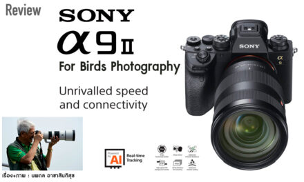 Review SONY α9 II FOR BIRDS PHOTOGRAPHY