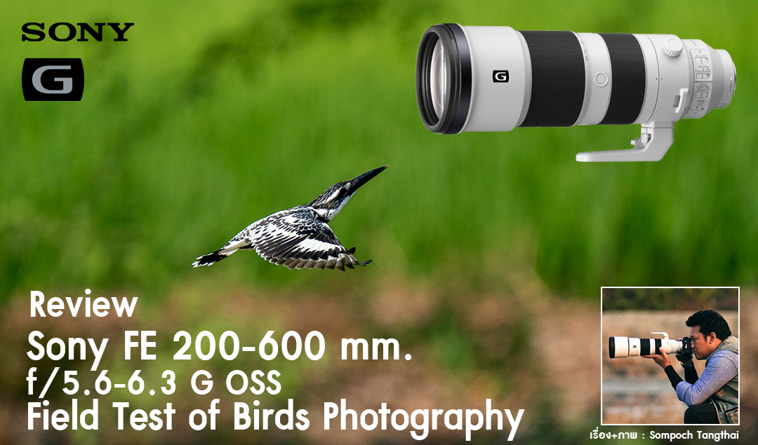 Review Sony FE 200-600mm f/5.6-6.3 G OSS Field Test of Birds Photography
