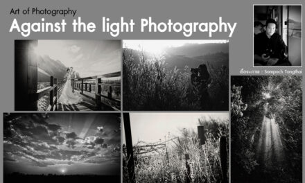 Art of Photography_Against the light Photography