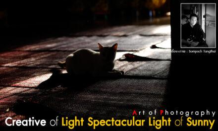 Art of Photography_Creative of Light Spectacular Light of Sunny