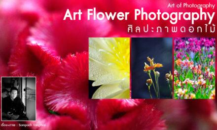 Art of Photography_Art Flower Photography ศิลปะภาพดอกไม้