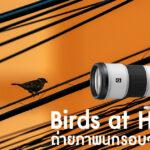 Birds at Home ถ่ายภาพนกรอบๆ บ้าน..